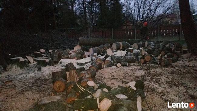 Wycinka drzew, pielęgnacja drzew, przycinka drzew, pilarz