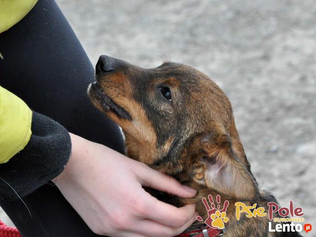 CEZAREK-kochany, wspaniały, uroczy malutki psiak-5 mies-adop
