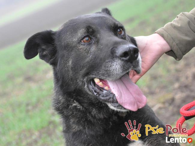 PUMEKS-wspaniały, piękny, duży dorodny pies-szukamy aktywneg