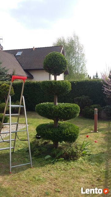 Usługi ogrodnicze karczowanie działek opryski przeciw komarą