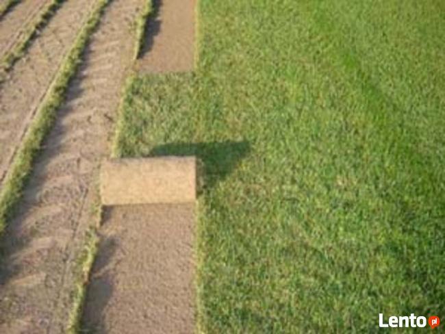 Regeneracja trawników. Usługi ogrodnicze. Trawniki z rolki.