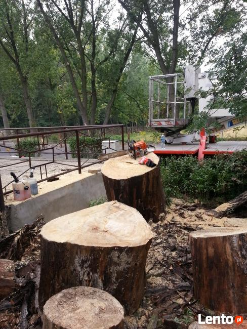 Wycinka drzew Bytom pielęgnacja drzew