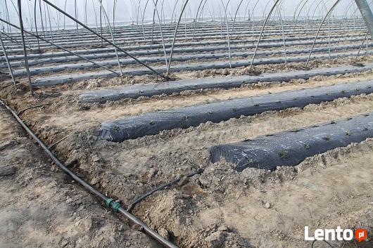 Trawniki, systemy nawadniające, automatyczne nawodnienia