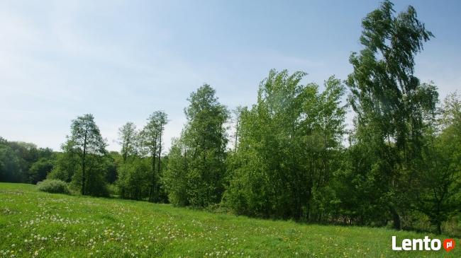 rekreacyjna nad jeziorem Długim/Modzerowskim przy lesie
