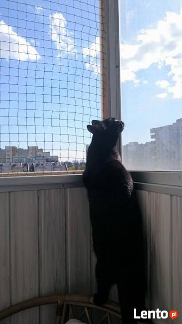 Zabezpieczenie balkonu . Siatka dla kota