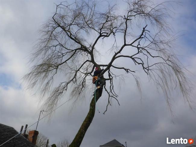 Wycinka drzew,usługi rębakiem i koszenie kosiarką bijakową