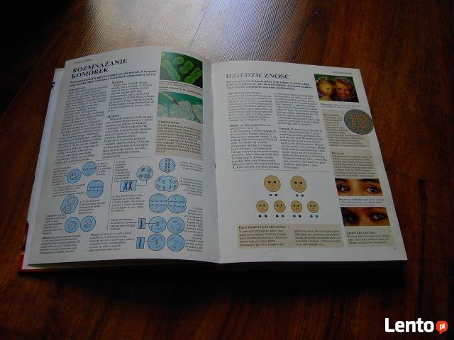 Szkolna encyklopedia