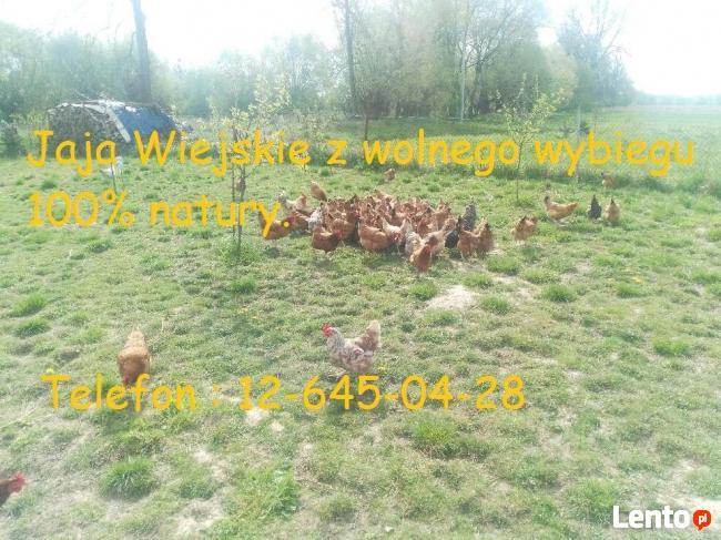 Jaja, Jajka Wiejskie Kury z wolnego wybiegu 100% Natura