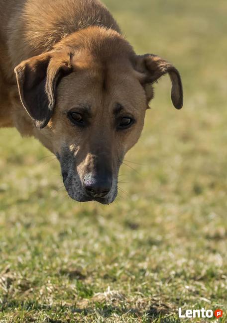 Pluto niezwykle przyjacielski pies szuka domu