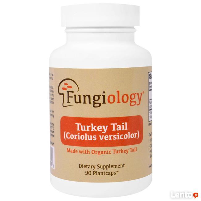 Fungiology, Wrośniak różnobarwny (Coriolus Versicolor)