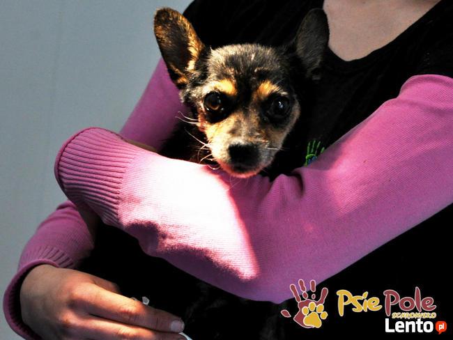 RAMBULINKA-bardzo zaniedbana psia kruszynka-szukamy DOMU