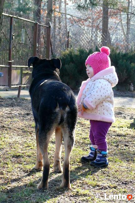 Kocha dzieci i aportowanie - Pharell do adopcji!