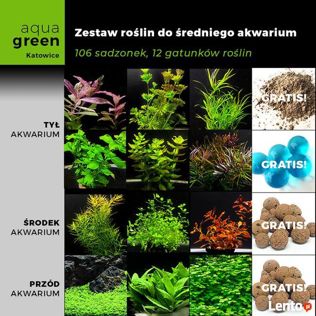 Zestaw roślin do średn. akwarium, 106 sadzonek, 12 gatunków