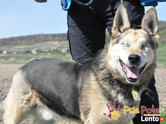 RAPUŚ-wspaniały, miły, pogodny, niewidomy psiak szuka dobreg