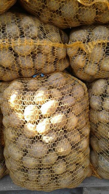 ziemniak sadzeniak odmiana Wineta ziemniaki żółte ziemniaki