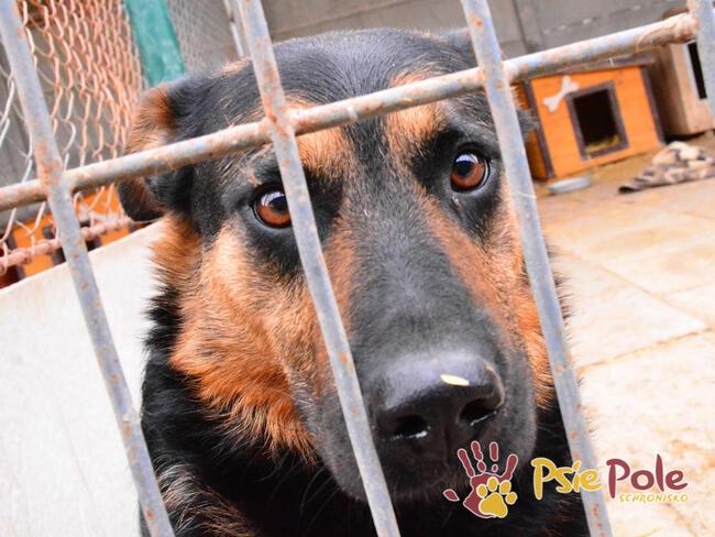 Murzynio - skrzywdzony psiak szuka doświadczonego opiekuna,