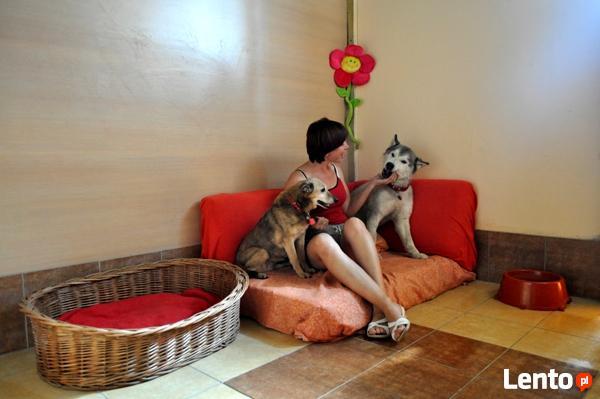 Hotel dla psa i kota PSANATORIUM i BASEN dla PSA