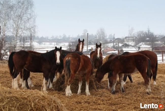 Ukraina. Pasieka, stadnina koni, bar, domy drewniane na 2 ha