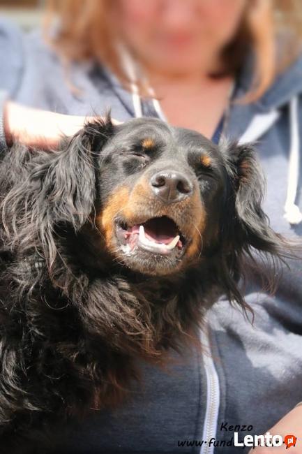 Kenzo - długowłosy psiak