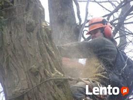Wycinka drzew trudnych. Oraz ciecie i rabanie drewna