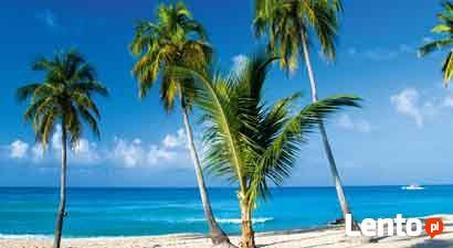 Antyle - rafy koralowe, palmy kokosowe