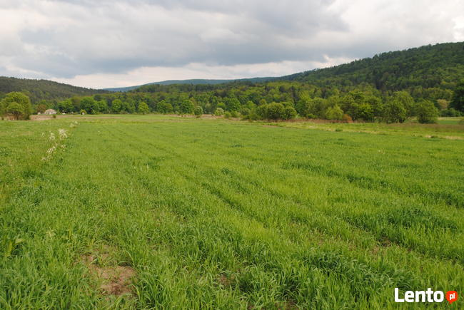 Piękna działka w Mrzygłodzie o pow. 0,2923 ha