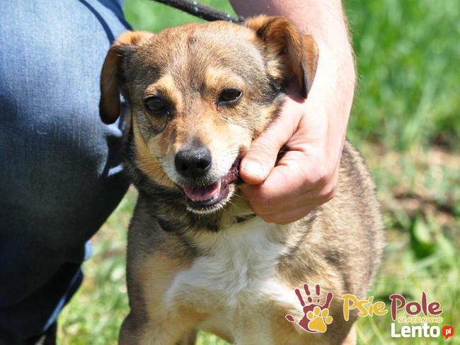 KACHUL-niewielki psiak o bardzo wesołym,radosnym usposobieni