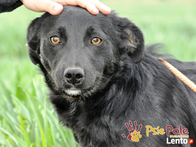 NEWSIK-malutki, grzeczny,spokojny młody psiak o uroczych oczk