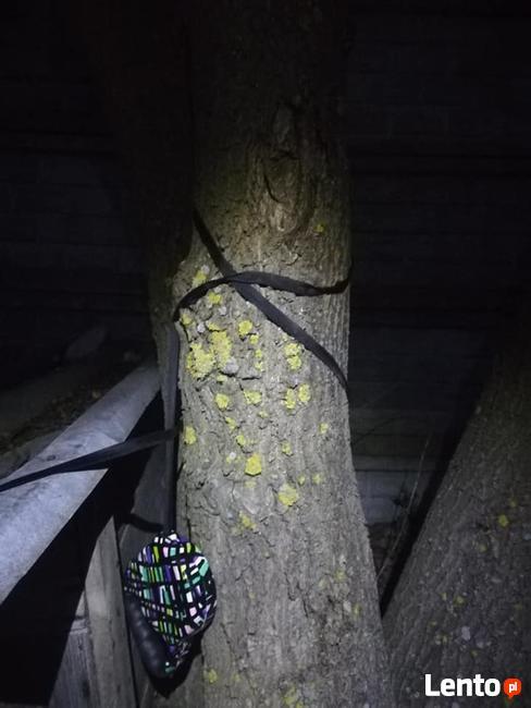 Maleńka YODA przywiązana do drzewa szuka domu