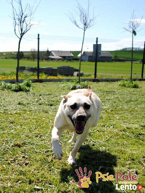 BRAJANEK-super fajny, wesoły,pogodny młody psiak-szukamy domu