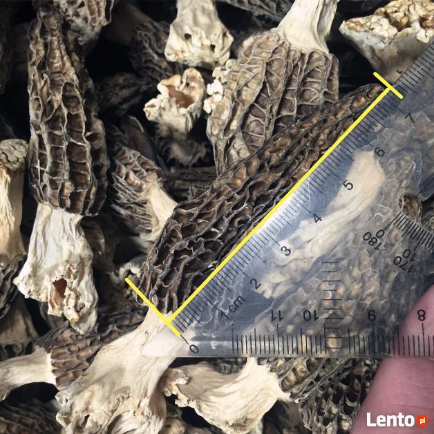 GRZYBY SUSZONE Morchella conica (Smardz Stożkowaty)1 kg
