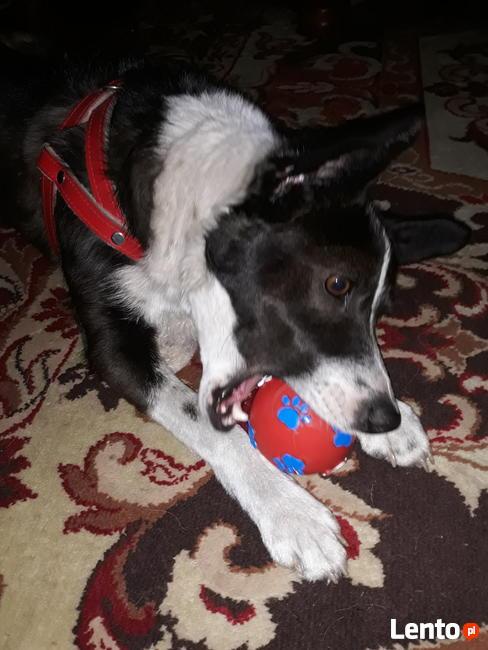 KARO - psiak uratowany z lasu szuka najlepszego Domu!