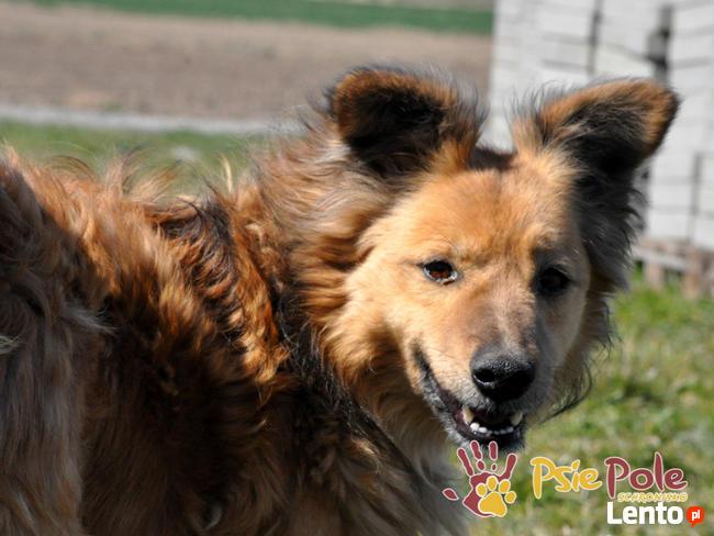 KELWINEK-wspaniały, przemiły,kochany kudłaty psiak-5 lat-ADOP