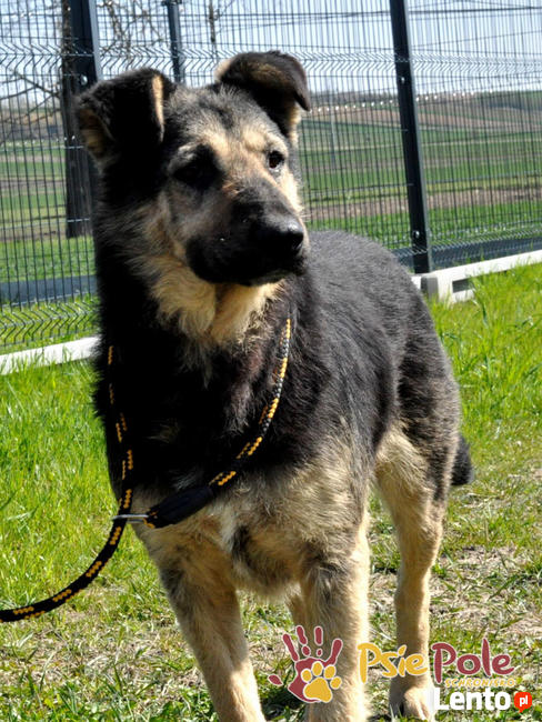SZMARAGD-wspaniały psiak-szlachetny jak kamień-super przyjac