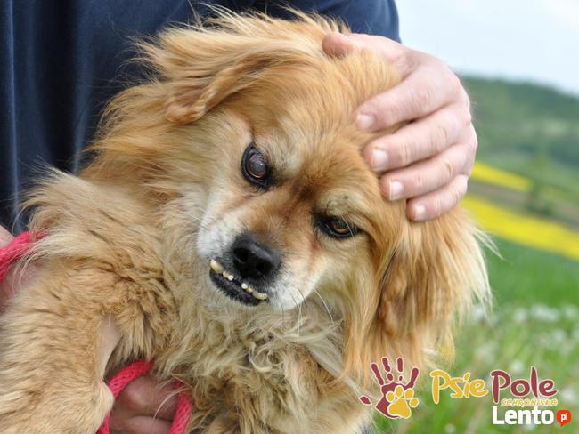 MONSTEREK-kochany kudłacz-uwielbia ludzi, bardzo lubi przytu
