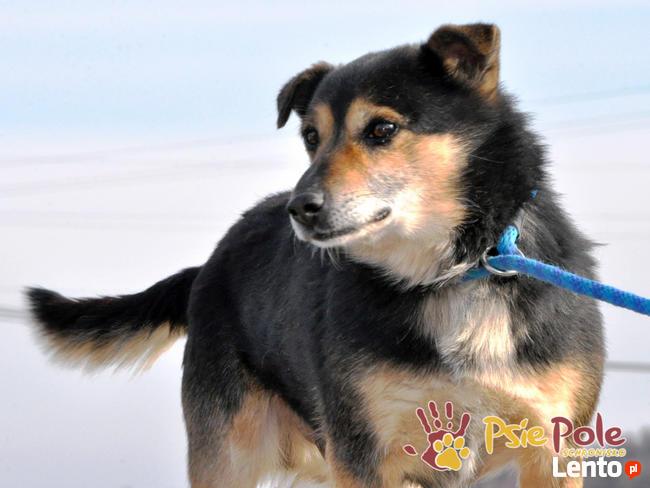TRAFCIU-nieduży, b.uroczy psiak o wyjątkowym psim spojrzeniu