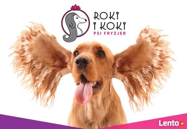 Szombierki Bytom psi fryzjer, fryzjer dla psów, groomer