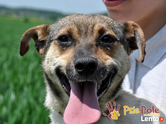 FIFI-kochany, wesoły, radosny i energiczny mały psiak-adopcja