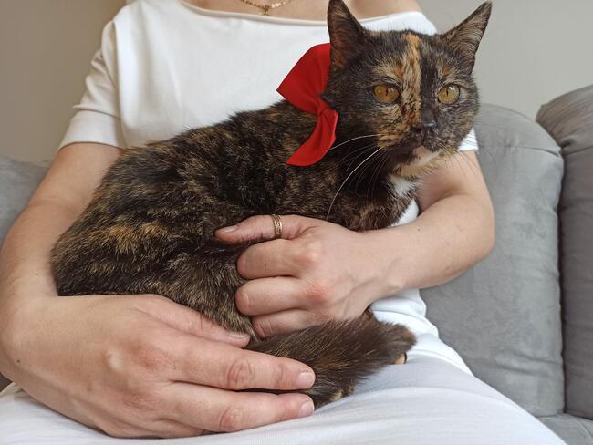 Romcia, szylkretowa kotka szuka kochającego domu!