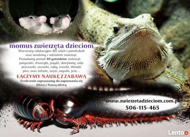 warsztaty zoologiczne z udziałem zwierząt