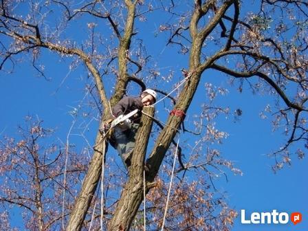 Wycinka drzew,krzewów, usówanie karp i przycinanie gałęzi