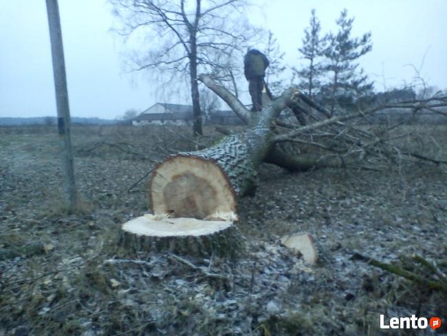 wycinanie drzew radzymin 504*017*817