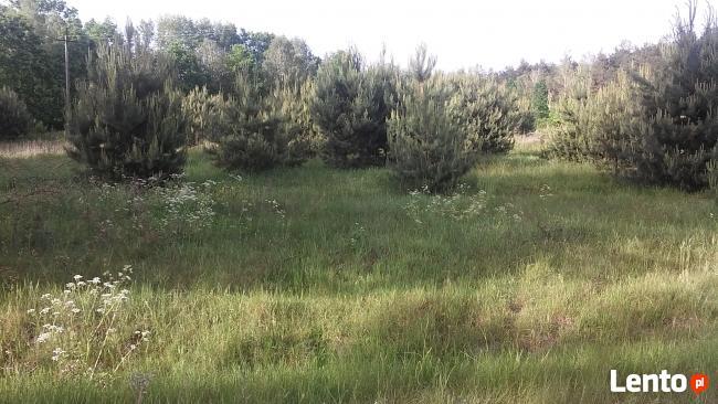 Sulejówek - Węgrów. Budowlana, warunki zabudowy, przy lesie