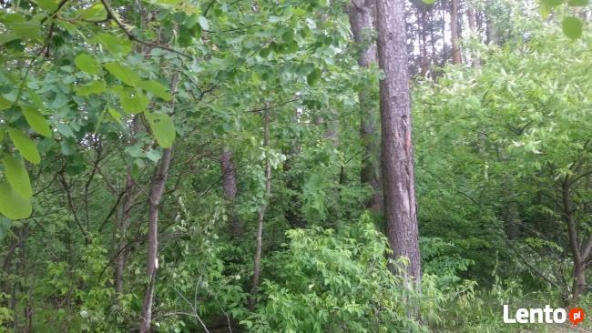 Sprzedam działkę leśną