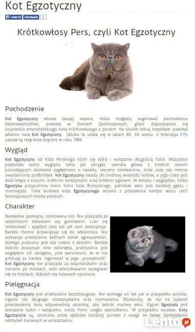 Rodowodowe kocięta EGZOTYCZNE i perskie