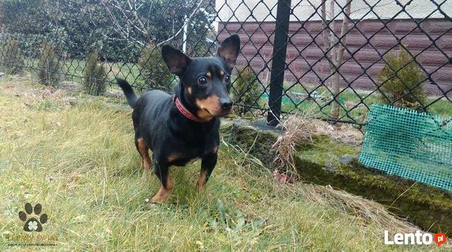 Pies do adopcji - Czerk szuka dobrego domu