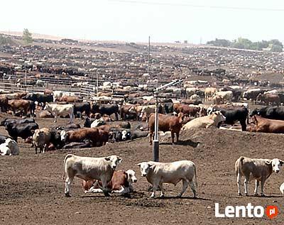 wspomaganie chowu i hodowli zwierząt dla zdrowia ludzi