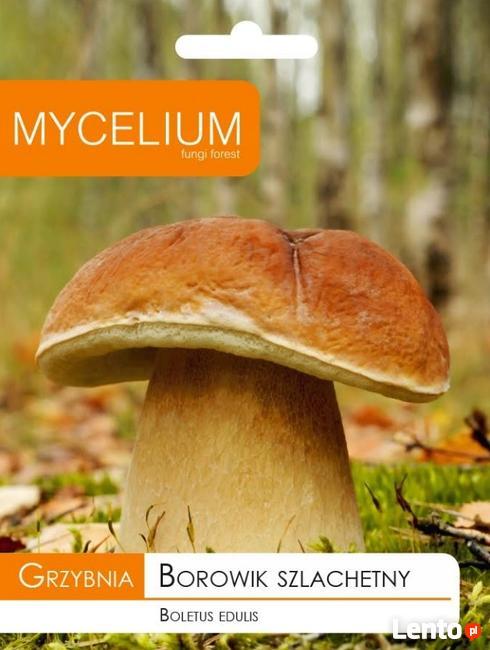 Grzybnia Borowik Szlachetny 10 g MYCELIUM