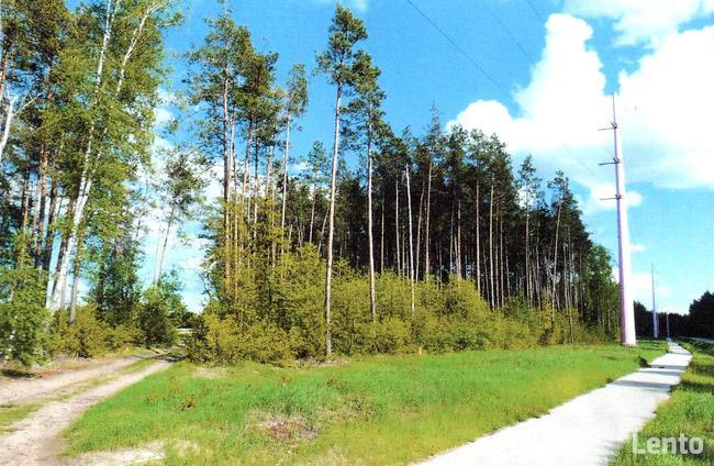 Randka - Chorzele - Mazowieckie Polska - Ogoszenia