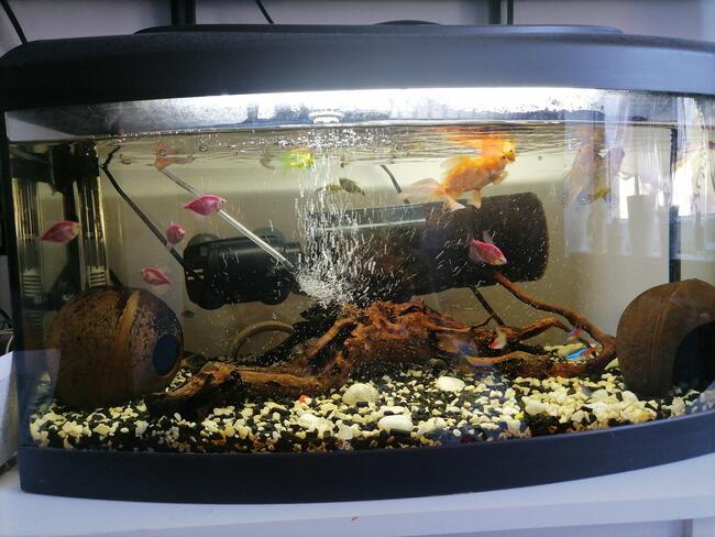 Akwarium panoramiczne 120 l